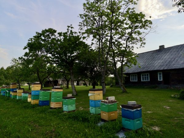 Beehives in a 100 years old garden