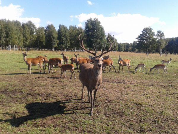Lithuanian Safari