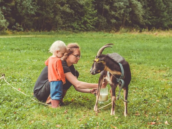 Family has not only chicken, but also and a friendly goat